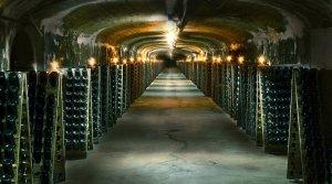 Onde comprar vinho em Montevidéu: vinícolas