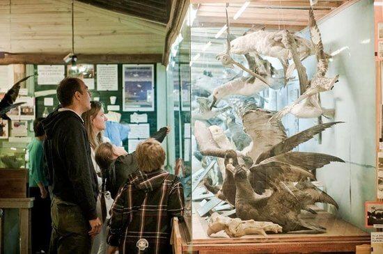 O que fazer com crianças em Punta del Este: Museo del Mar