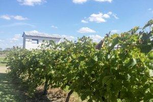 Vinícolas em Punta del Este: Bodega Viñedo de los Vientos