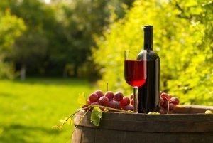 Montevidéu em agosto: vinícola
