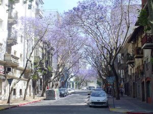 Montevidéu em outubro: Ciudad Vieja
