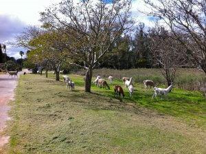 ZooParqueLecocq em Montevidéu: animais