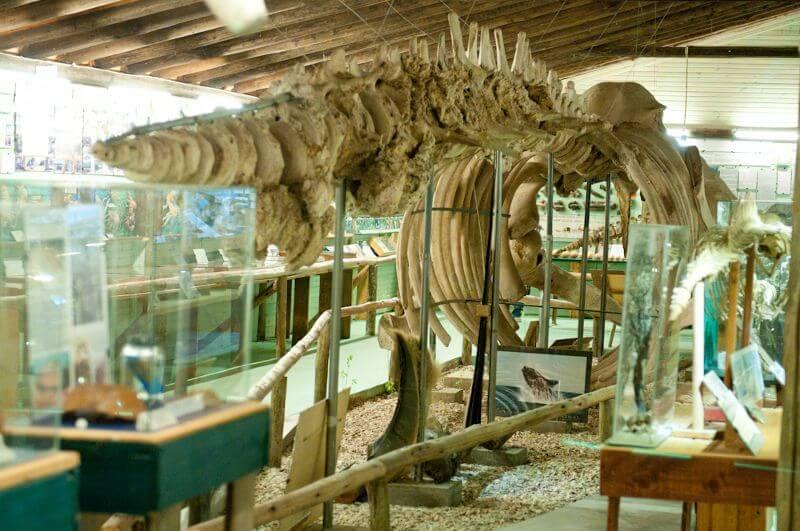 Museo del Mar em Punta del Este: espécies marinhas