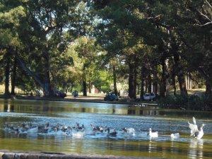 Parque Rivera em Montevidéu: lago